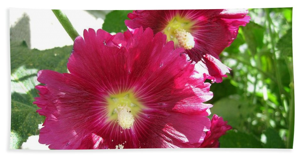 Mccombie Bath Sheet featuring the photograph Giant Single Carmine Hollyhock by J McCombie