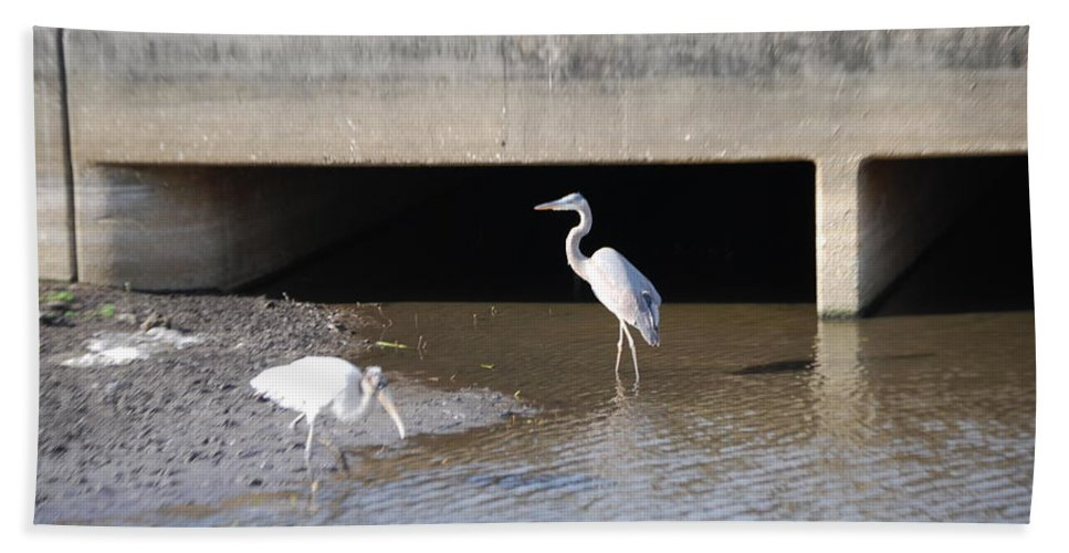 Feeding In The Ditch. Florida Hand Towel featuring the photograph Great White Heron by Robert Floyd