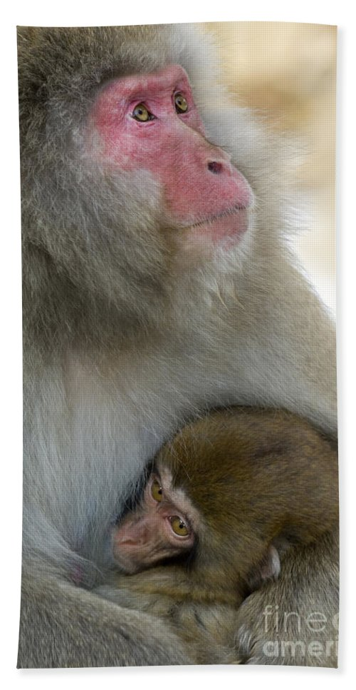Baby Animal Bath Sheet featuring the photograph Japanese Macaques by John Shaw