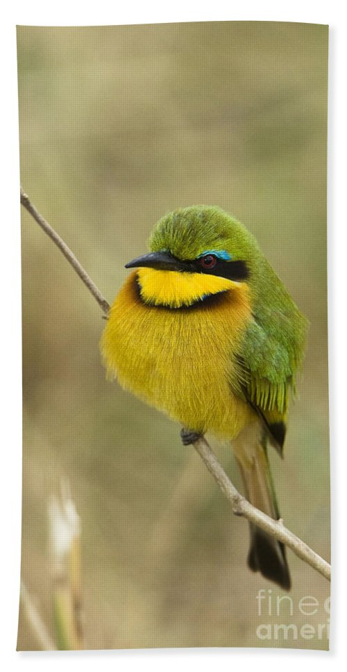 African Fauna Bath Sheet featuring the photograph Little Bee-eater by John Shaw