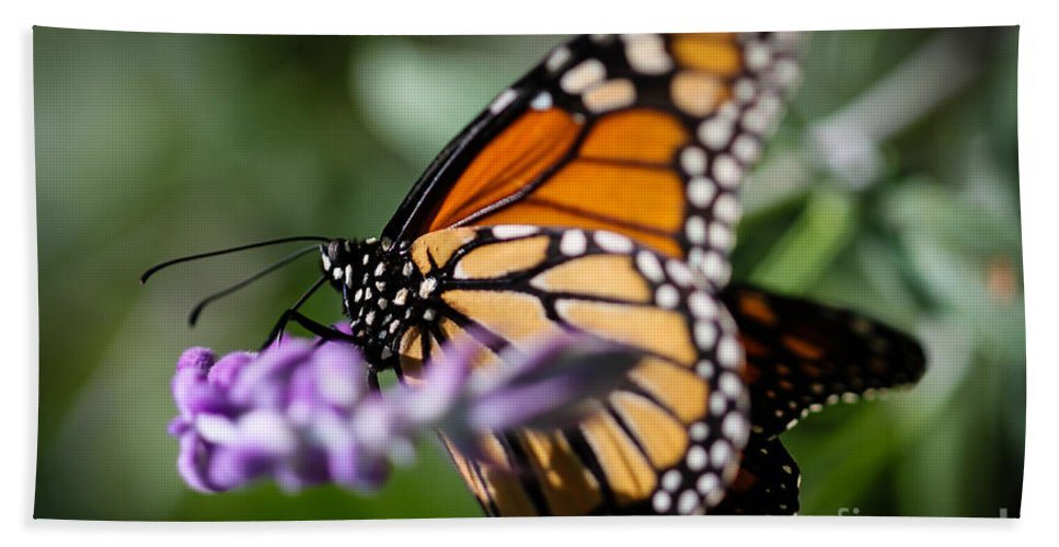 Monarch Hand Towel featuring the photograph Monarch Danaus Plexippus by Henrik Lehnerer