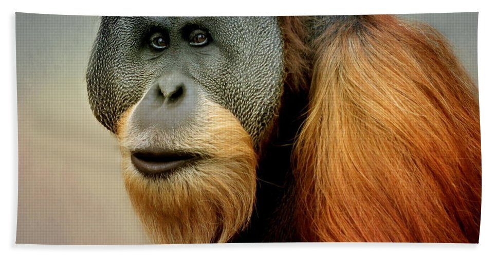 Animal Bath Sheet featuring the photograph Orang Utan by Heike Hultsch