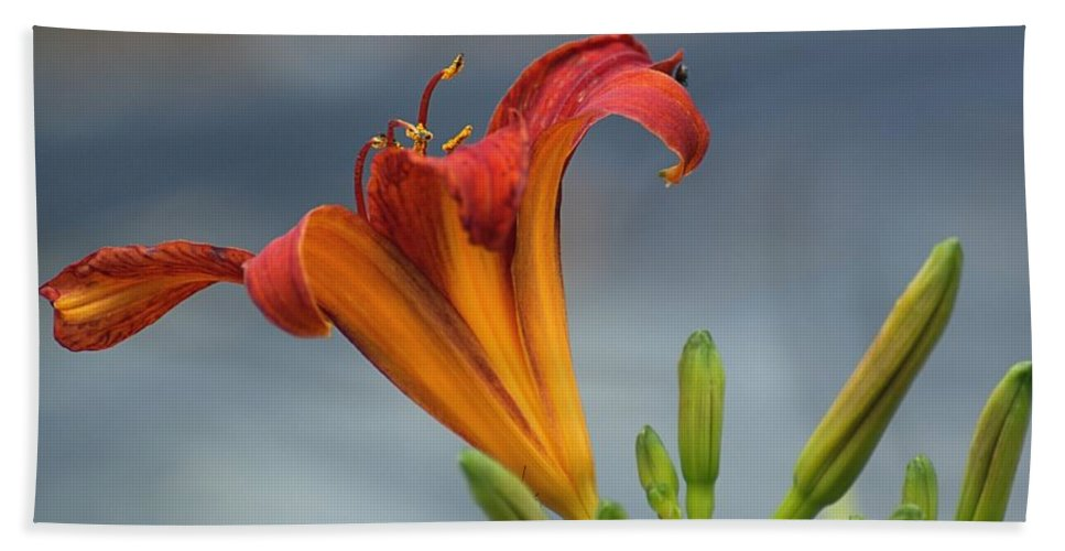 Daylillies Hand Towel featuring the photograph Orange Daylily by Mel Hensley