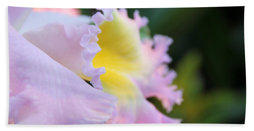 Orchid Bath Sheet featuring the photograph Orchid by Erin McCandless