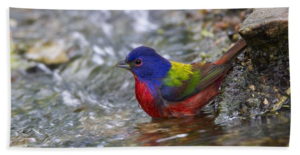 Doug Lloyd Hand Towel featuring the photograph Painted Bunting by Doug Lloyd