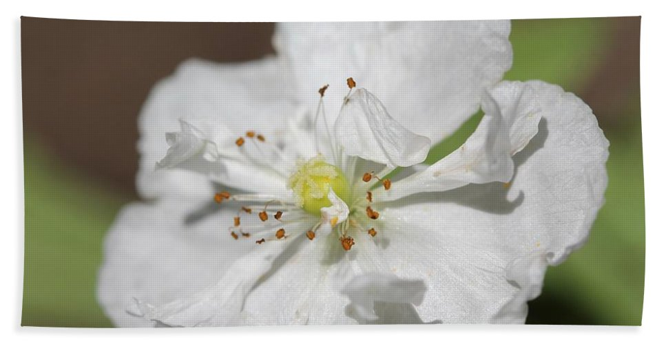 Mccombie Hand Towel featuring the photograph Poppy From The Angel's Choir Mix by J McCombie