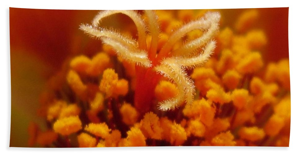 Mccombie Bath Sheet featuring the photograph Portulaca In Orange Fading To Yellow by J McCombie