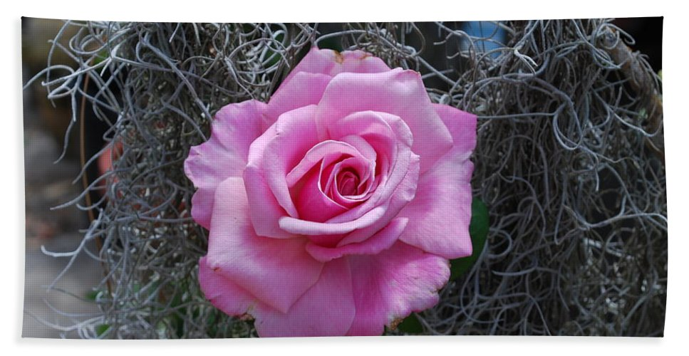 Spanish Moss Background Hand Towel featuring the photograph Rose by Robert Floyd