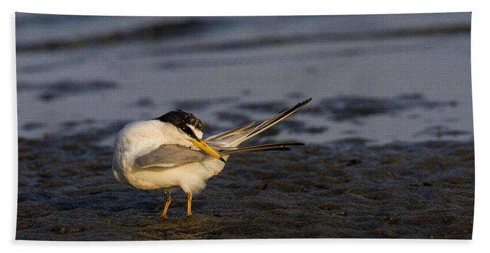Doug Lloyd Hand Towel featuring the photograph Sandwich Tern by Doug Lloyd