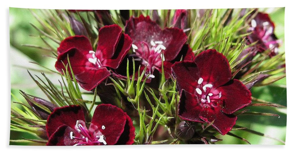 Mccombie Bath Sheet featuring the painting Sweet William Named Sooty by J McCombie