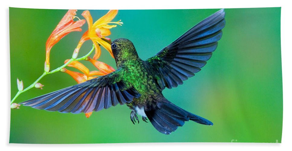 Animal Hand Towel featuring the photograph Tourmaline Sunangel by Anthony Mercieca