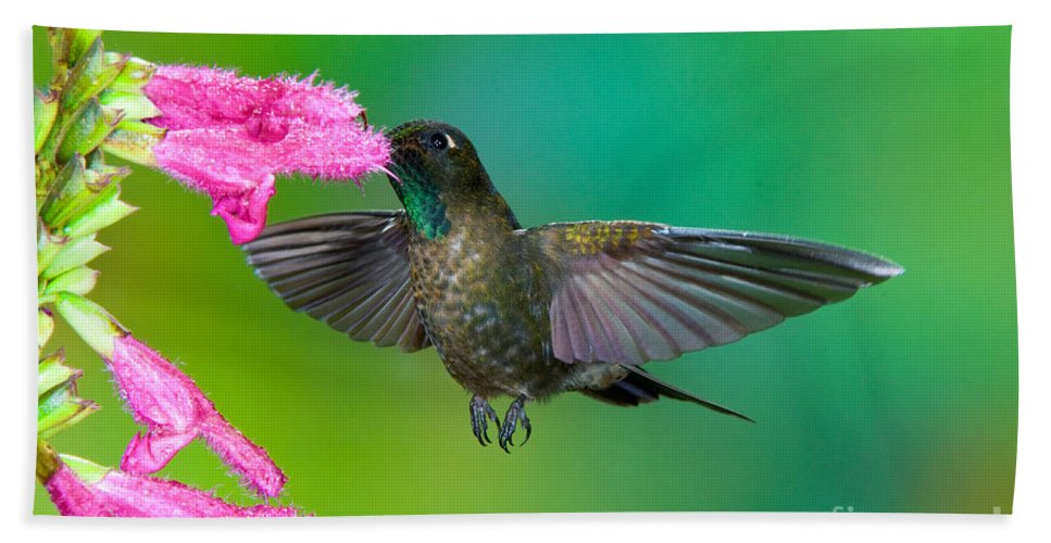 Animal Hand Towel featuring the photograph Tyrian Metaltail by Anthony Mercieca