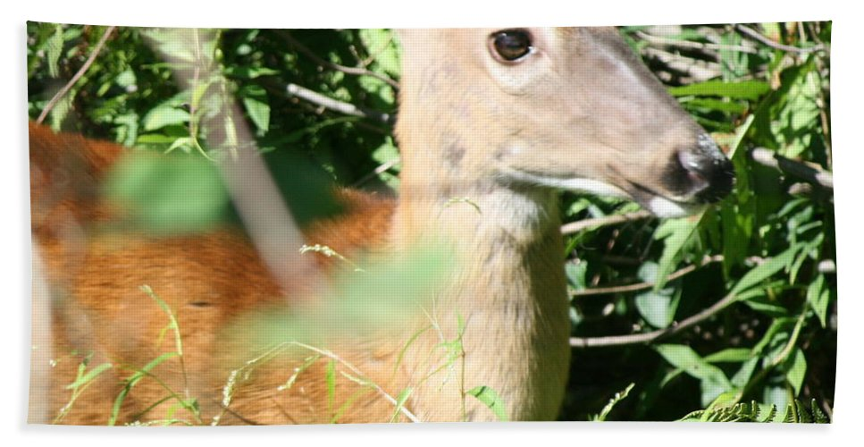 Nature Bath Sheet featuring the photograph White Tailed Deer Portrait by Neal Eslinger
