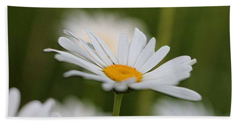 Mccombie Hand Towel featuring the digital art Wildflower Named Oxeye Daisy by J McCombie