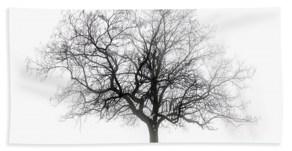 Tree Hand Towel featuring the photograph Winter Tree In Fog by Elena Elisseeva