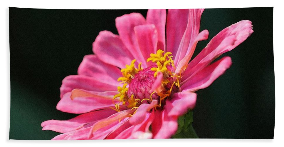Mccombie Bath Sheet featuring the painting Zinnia From The Whirlygig Mix by J McCombie