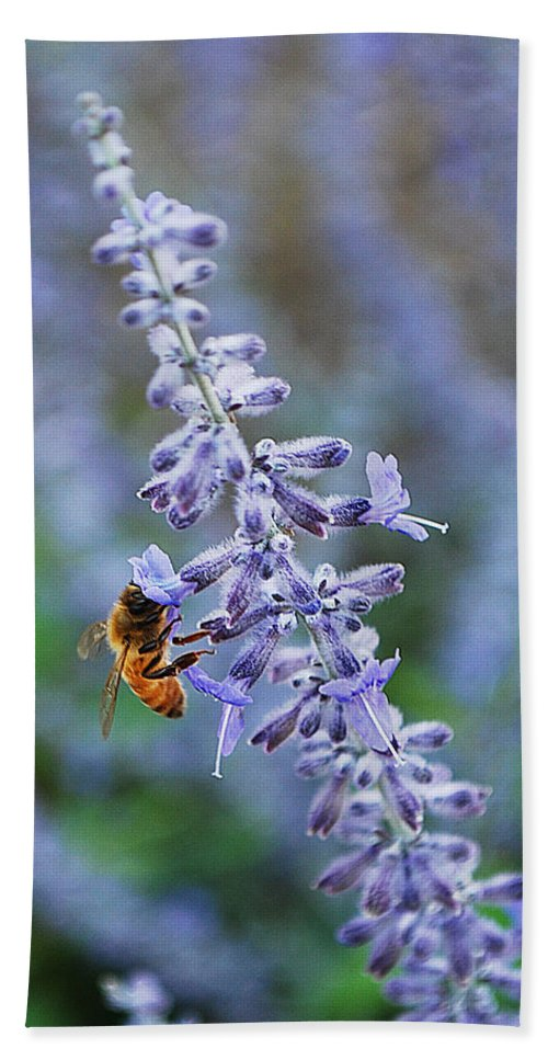 Becky Furgason Hand Towel featuring the photograph #russiansage by Becky Furgason