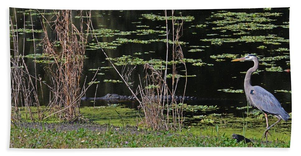 Bath Sheet featuring the photograph 44- Alligator - Great Blue Heron by Joseph Keane