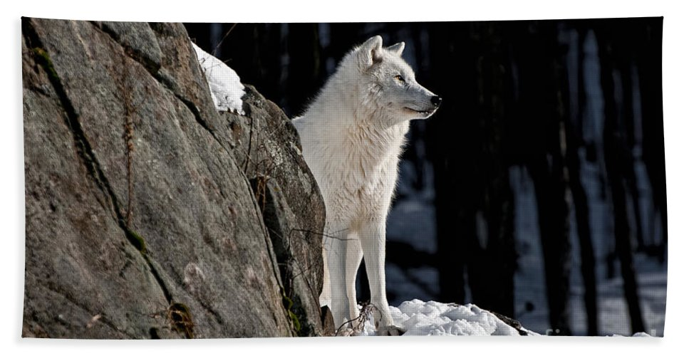 Arctic Wolf Photography Hand Towel featuring the photograph Arctic Wolf by Wolves Only