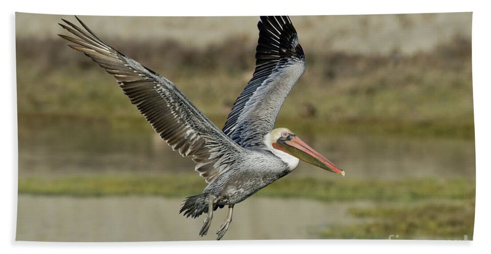 Brown Pelican Hand Towel featuring the photograph Brown Pelican by Anthony Mercieca