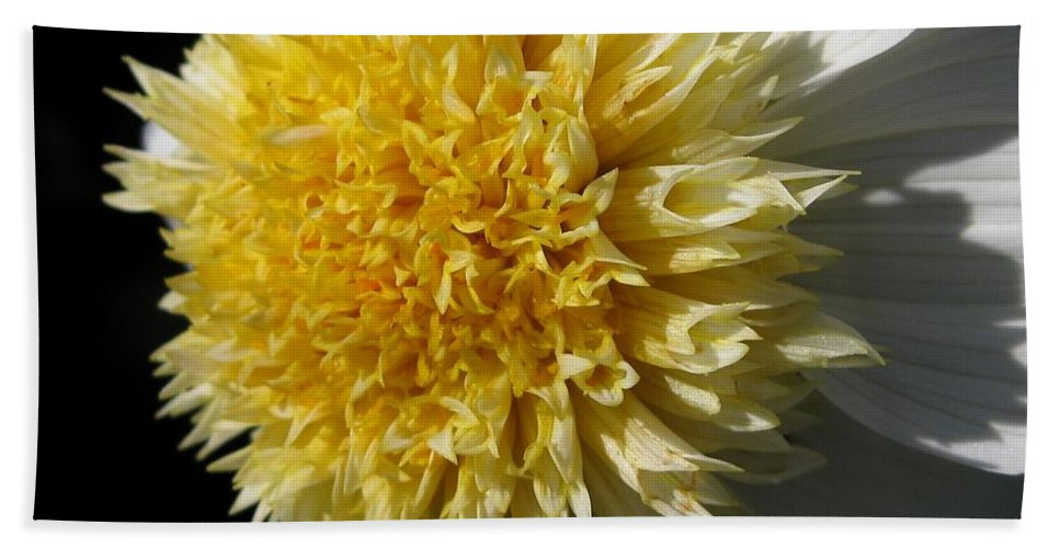 Mccombie Bath Sheet featuring the photograph Dahlia Named Platinum Blonde by J McCombie