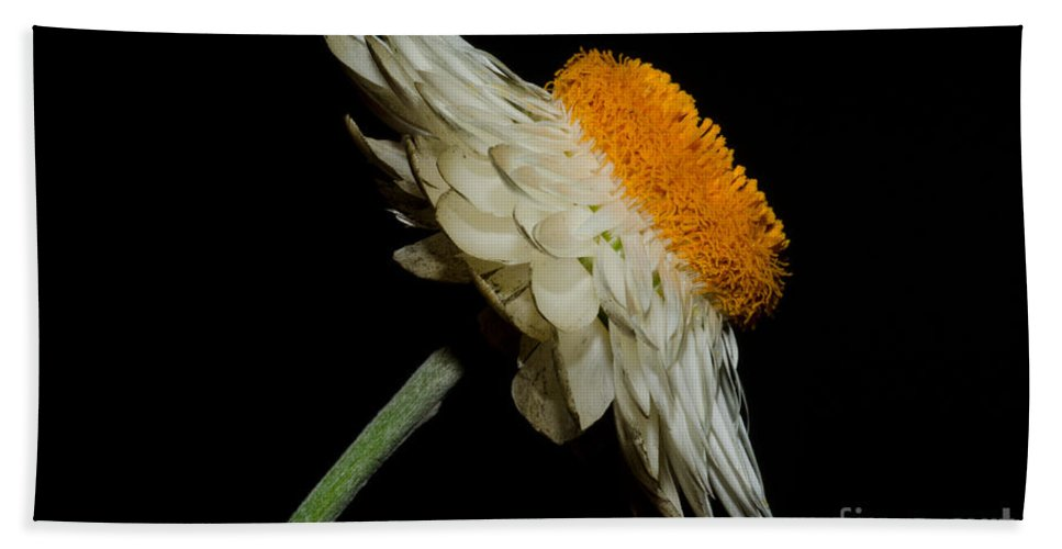 Daisy Flower Hand Towel featuring the photograph Daisy Flower by Mats Silvan