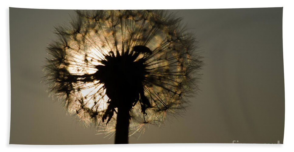 Dandelion Bath Sheet featuring the photograph Dandelion by Mats Silvan
