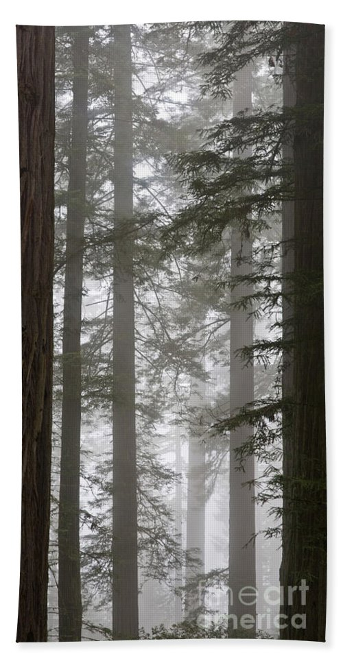 Plant Hand Towel featuring the photograph Foggy Coast Redwood Forest by Gregory G. Dimijian, M.D.