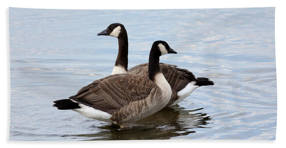 Wildlife Hand Towel featuring the photograph Geese by Lori Tordsen