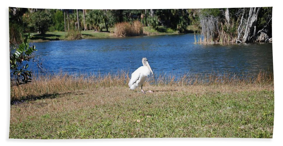 Passing Time Hand Towel featuring the photograph Great White Heron by Robert Floyd