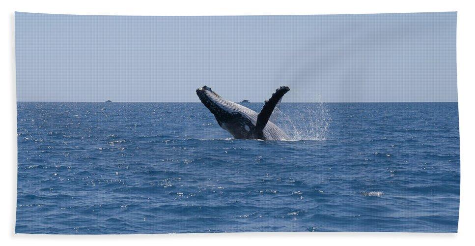 Australia Queensland Qld Bath Sheet featuring the digital art Humpback Whales by Carol Ailles