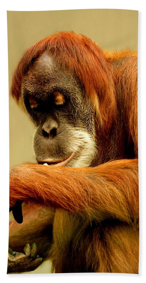 Animal Bath Sheet featuring the photograph Orang Utan by Heike Hultsch