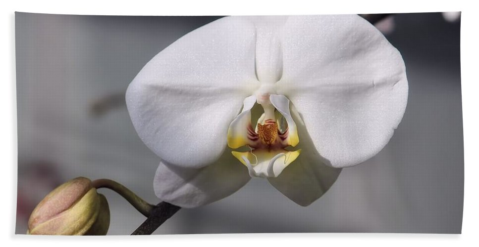 White Bath Sheet featuring the photograph Orchid by Joyce Baldassarre