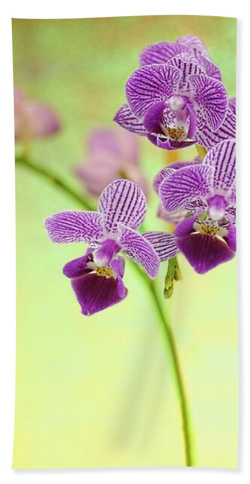 Orchid Hand Towel featuring the photograph Purple Orchid-8 by Rudy Umans