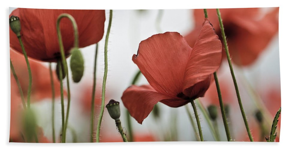 Poppy Hand Towel featuring the photograph Red Poppy Flowers by Nailia Schwarz