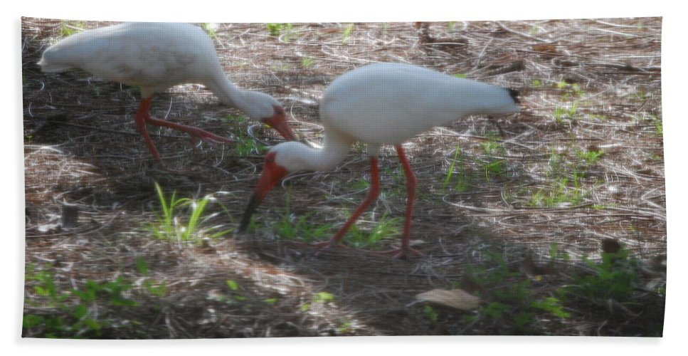 Suncoast Exterminator Hand Towel featuring the photograph White Ibis by Robert Floyd