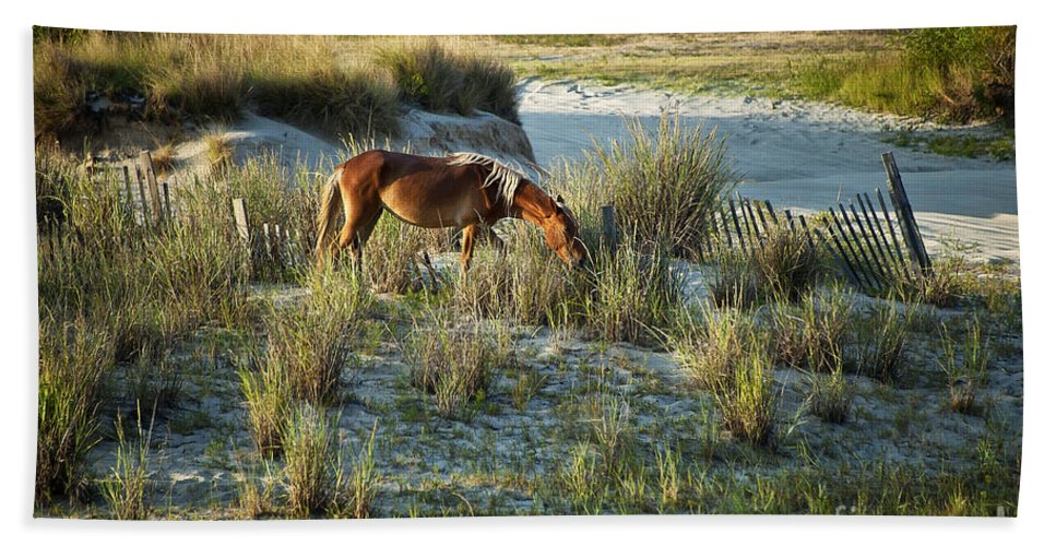 Currituck Bath Sheet featuring the photograph Wild Spanish Mustang by John Greim