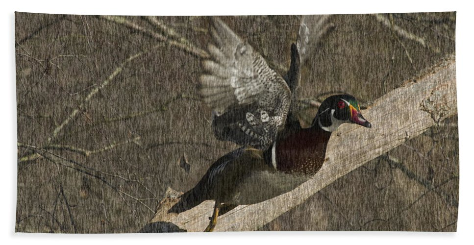 Wood Duck Hand Towel featuring the photograph Wood Duck by Rob Mclean