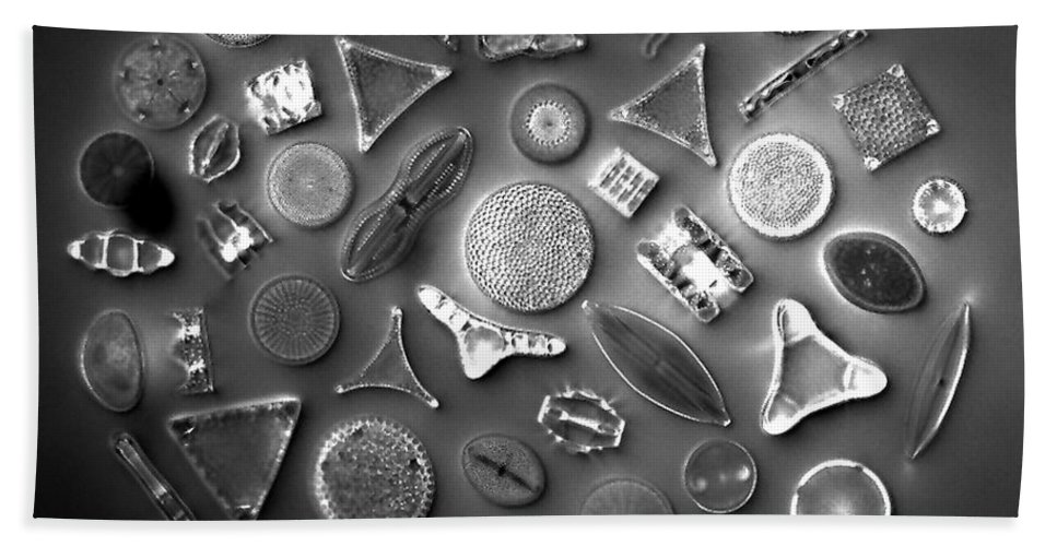 Diatom Hand Towel featuring the photograph 50 Diatom Species Arranged by Science Source