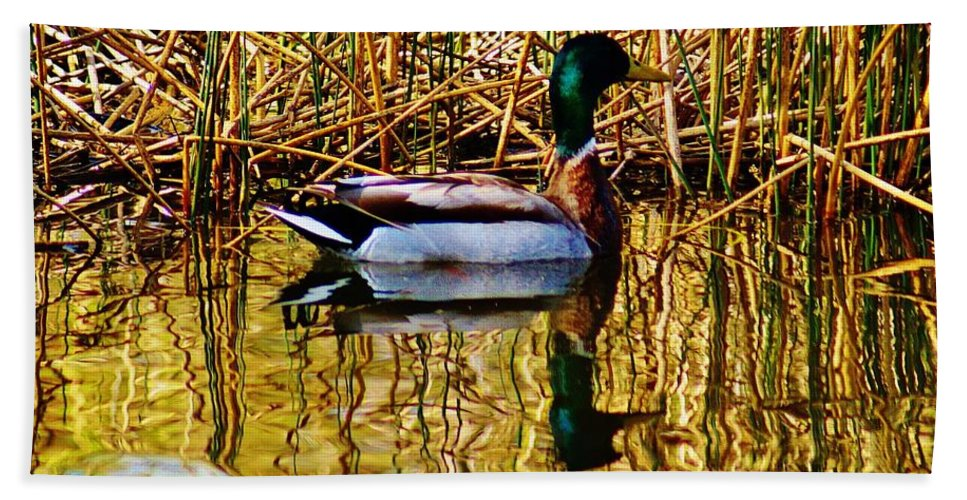 Bath Sheet featuring the photograph 5.4.2014 Wild Mallard by Daniel Thompson