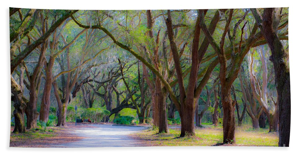 Allee Hand Towel featuring the photograph Allee Of Oaks by Dale Powell