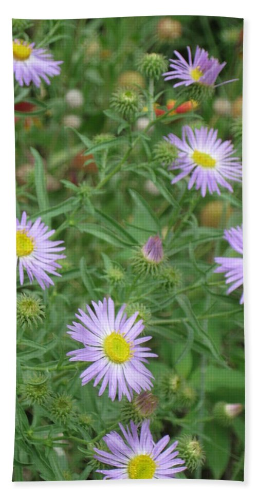 Asters Hand Towel featuring the photograph 6 Asters Left by Ron Monsour