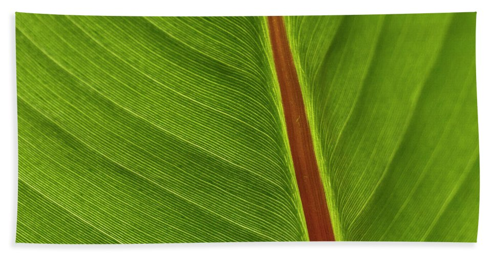 Leaf Hand Towel featuring the photograph Banana Leaf by Heiko Koehrer-Wagner