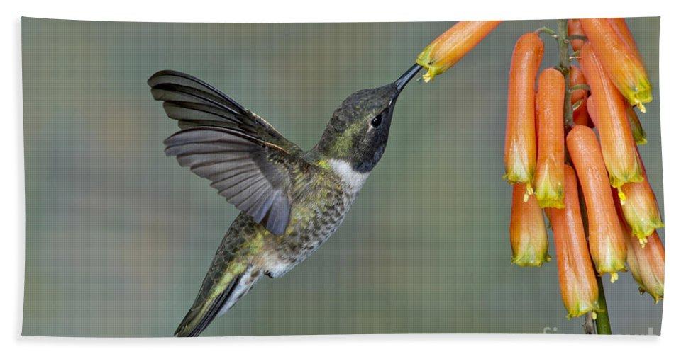 Black-chinned Hummingbird Hand Towel featuring the photograph Black-chinned Hummingbird by Anthony Mercieca