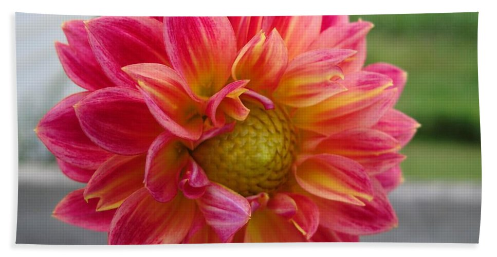 Dahlia Hand Towel featuring the photograph Dahlia Named Brian's Sun by J McCombie
