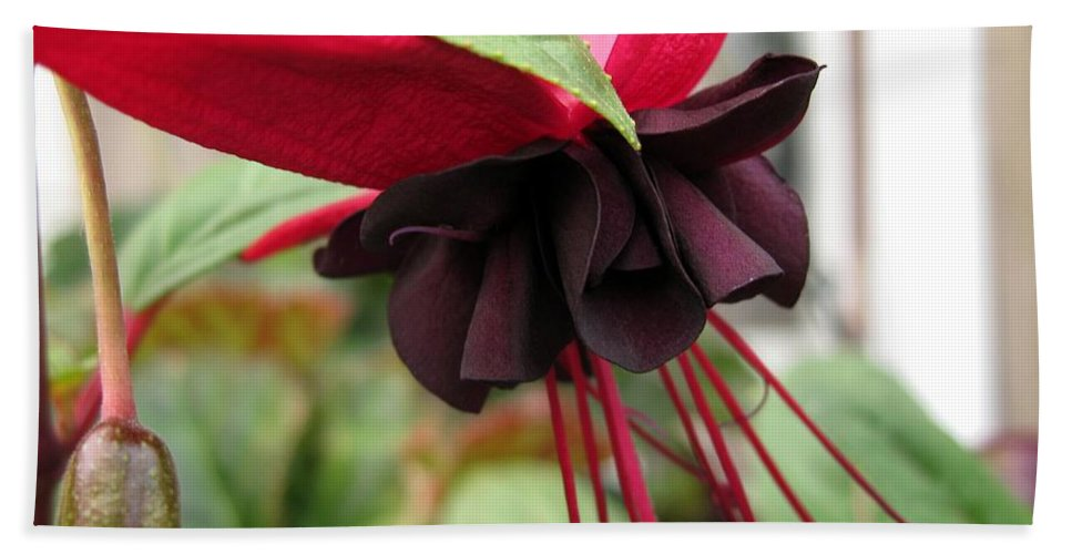 Mccombie Bath Sheet featuring the photograph Fuchsia Named Roesse Blacky by J McCombie