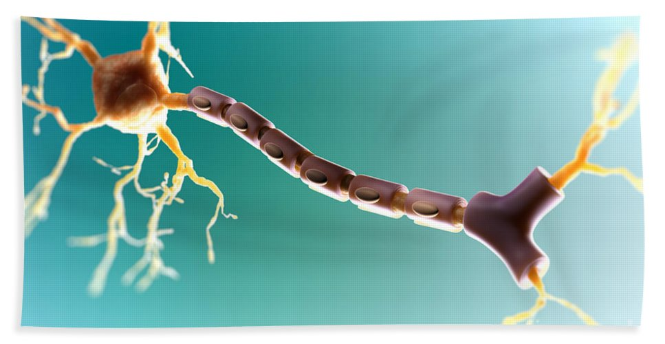 Multipolar Neuron Hand Towel for Sale by Science Picture Co