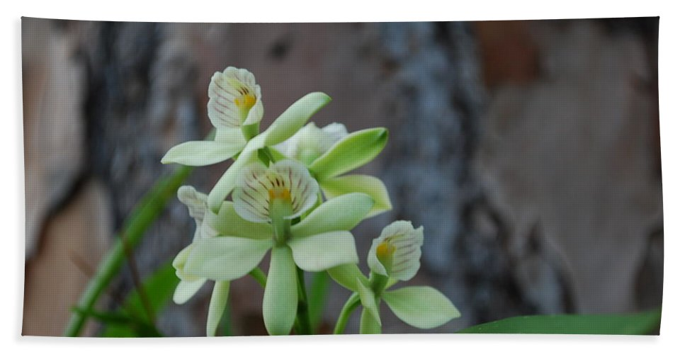 On Tree In My Yard Hand Towel featuring the photograph Orchid by Robert Floyd