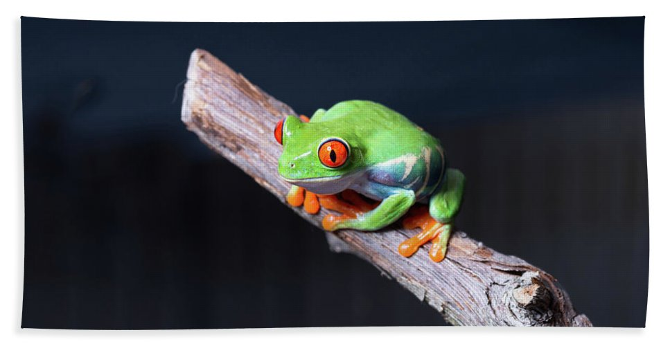 Photography Hand Towel featuring the photograph Red-eyed Tree Frog Agalychnis by Panoramic Images