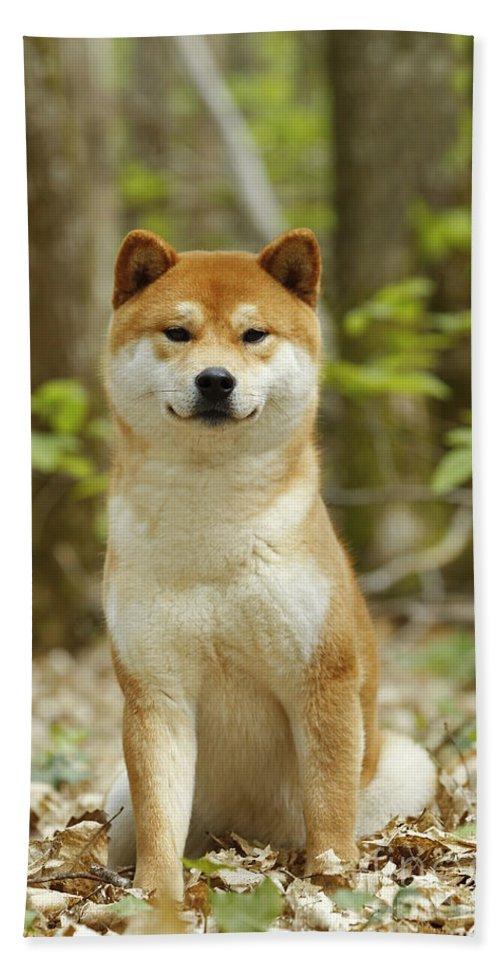 Shiba Inu Bath Sheet featuring the photograph Shiba Inu Dog by Jean-Michel Labat